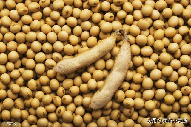 关于大豆高产栽培技术,你知道多少?这么全面的知识不可不知