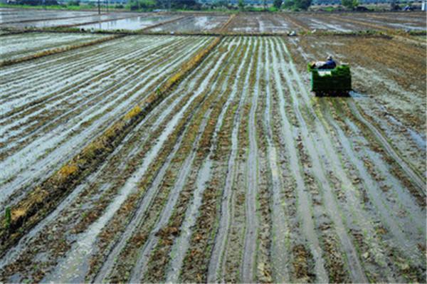水稻的种植方式与管理