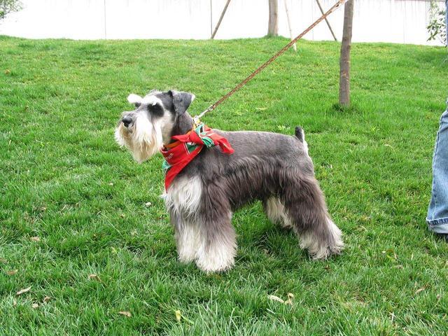 """最""""好养""""的6种狗狗,我大中华田园犬位居榜首,你养的是哪种"""